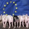 940_630_eu_pigs